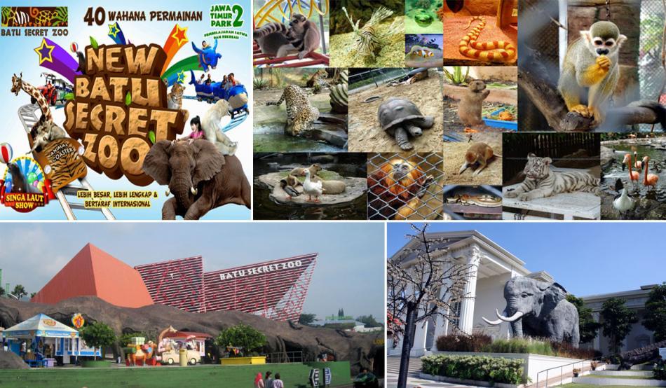 Secret Zoo Batu